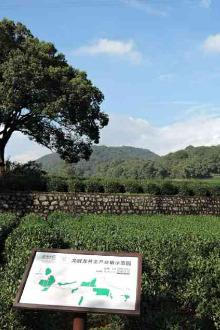 【毅行拉练之二】九溪~梅家坞~龙翔桥