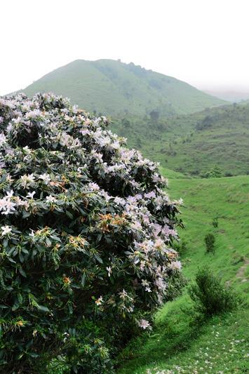 4月10日新兴天露山穿越 登广东千米山、看漫山杜鹃