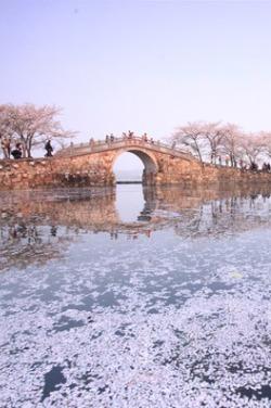 【活动集结】4月2号路游桐城与你相约鼋头渚赏樱花