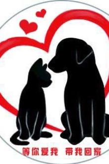 宠物交流 关爱流浪猫狗