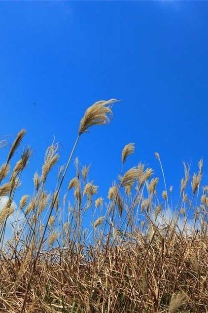 12-18白云嶂,观云海、赏高山金色草甸&芦苇荡!