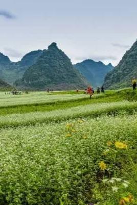周日12月13日隆安布泉河更望湖徒步赏荞麦花海摄影