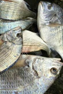 12月4日中午出发渔山列岛钓5日6日开始预约
