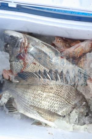 03月18日~03月20日渔山列岛海钓活动预约