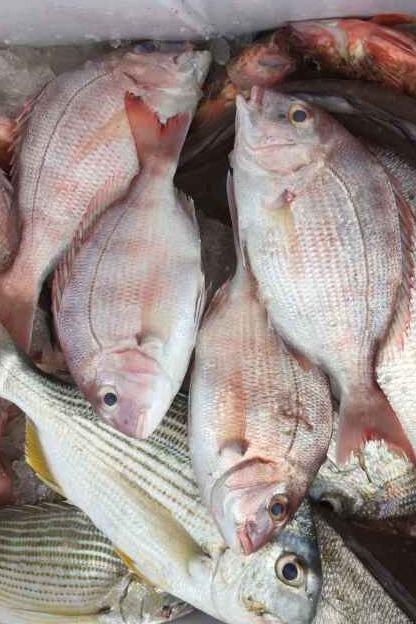 11月27日中午出发渔山列岛钓28日29日开始预约