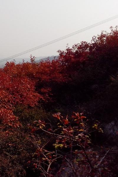 周末一起去崛围山看红叶吧