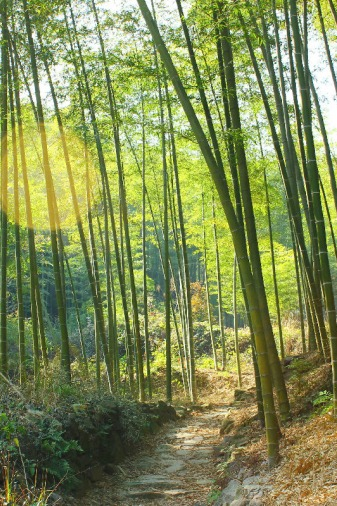 12.24徒步上青古道、寻找兰若寺、赏幽幽竹海