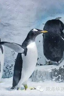 去华夏海洋馆看海洋动物和表演一起吧!