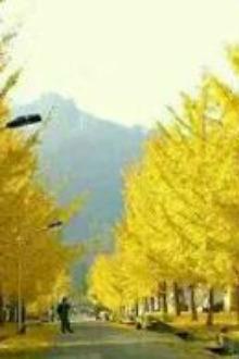 2015年11月15日寻找金色的童话-南雄帽子峰赏银杏