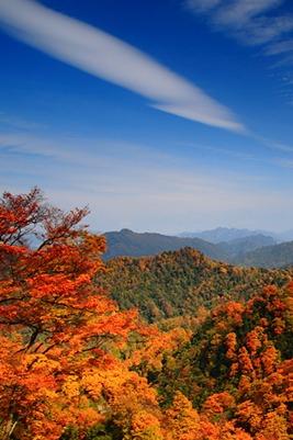 11月3晚-6日探索红叶秘境,超越光雾山米亚罗太多