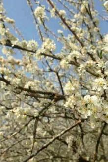 阳江自驾游情侣、单身、三五成群结伴赏花之旅