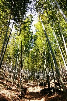 【大满贯】一日穿越龙池山-黄塔顶-宜兴竹海!