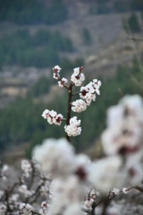 4月9日租车自驾马山,双泉看花,拍照