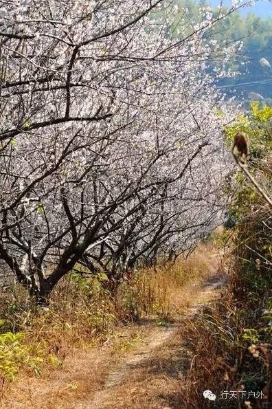 11.08号探索广州最美路线—从化星溪